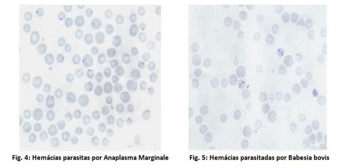Figuras 4 e 5