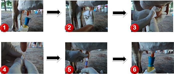 Sequência de procedimentos  visando a desinfecção do teto antes e após o tratamento evitando a introdução de micro-organismos