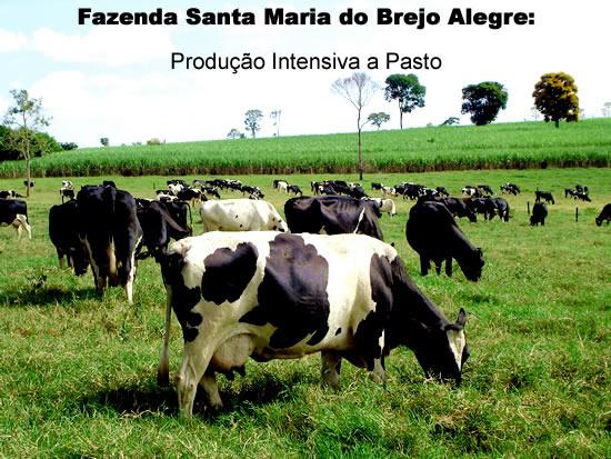 SantaMariaBerjoAlegreJunho09001.jpg